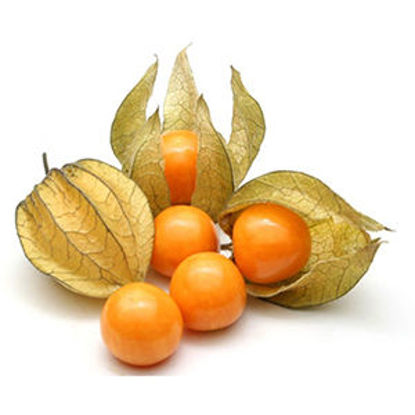 Picture of Physalis Emba. 100gr